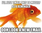 Goldfish-attention-span