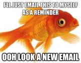Goldfish-attention-span